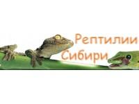 Логотип Рептилии Сибири, ООО