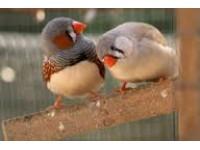 Логотип Услуги орнитолога, все виды диагностики птицы
